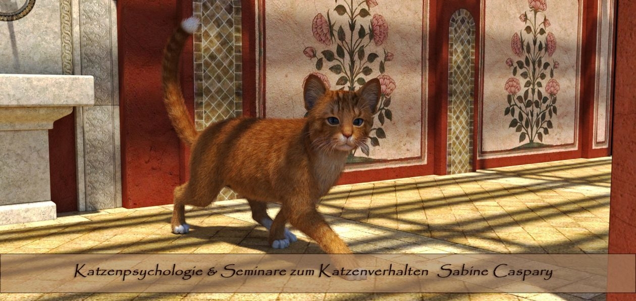 Katzenpsychologie Blog